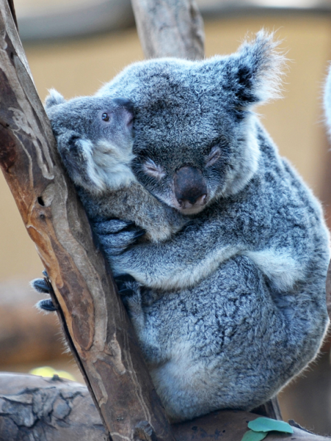 2-cute-animal-hugs
